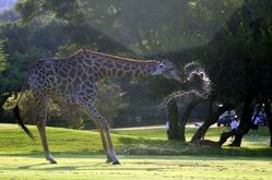 south africa course2.jpg